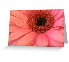 Flower – Gerbera Cards and Gifts Greeting Card