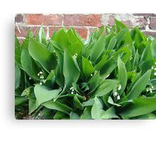 Lilies of the Valley Canvas Print
