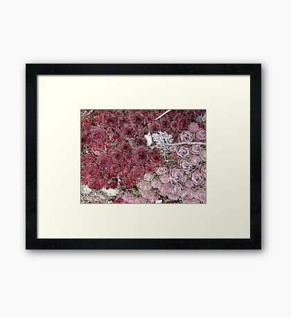 Stonecrop on a Granite Boulder Framed Print