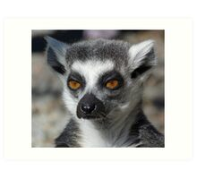 Contemplation - Ring-tailed Lemur Art Print