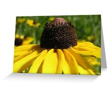Yellow daisy Greeting Card and Gifts Greeting Card
