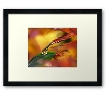 Life on Earth Framed Print