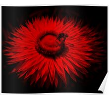 Bee On A Red Flower Poster