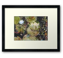 Forest Pond Framed Print