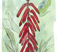 Aloe flowers - Nature's silent healer by Maree Clarkson