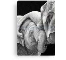 A Gentle Touch - Affectionate Elephants Canvas Print