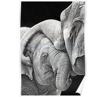 A Gentle Touch - Affectionate Elephants Poster