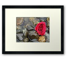 Red Rose at the Rocky Beach Framed Print
