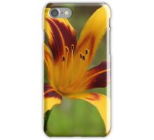 Flashy Petals - Daylily iPhone Case/Skin