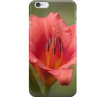 Strawberry Dreaming - Daylily iPhone Case/Skin