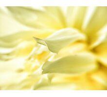 Bright Yellow Flower Photographic Print