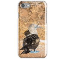 Blue-footed booby iPhone Case/Skin