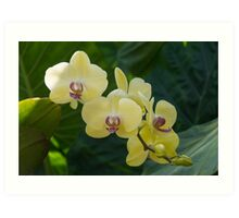 Pale Yellow Orchids in Lush Jungle Green Art Print