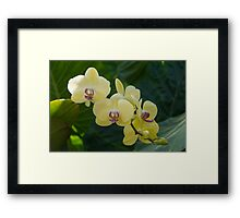 Pale Yellow Orchids in Lush Jungle Green Framed Print