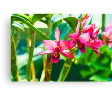 Tropical Impressions - Vibrant Pink Orchids Canvas Print
