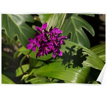 Hot Pink Orchids - Exotic Tropical Shadows Poster
