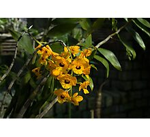 Exotic Orchids - Bright Yellow Smileys  Photographic Print