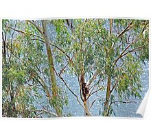 Aroona Dam sparkles through the gums Poster