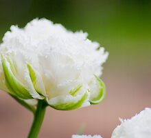 Flowers by asmodeuss