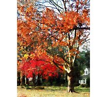Autumn Sycamore Tree Photographic Print