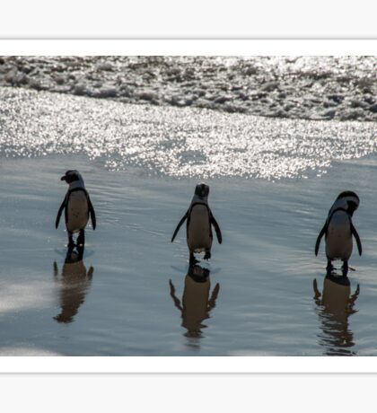 African Penguins, South Africa Sticker