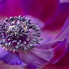 Purple Delight by imagejournal
