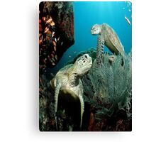 Turtle in the Ocean Canvas Print