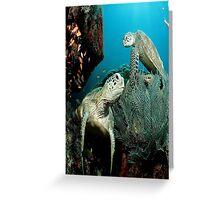 Turtle in the Ocean Greeting Card