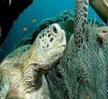 Turtle in the Ocean Sticker