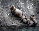 Sea Lions on the Lynn Canal by Yukondick
