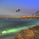 Searching ~ Sunset Cliffs, California ~ United States by Marie Sharp