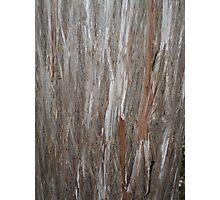 Raw Wood Photographic Print