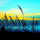 Blustery Beach (color edit) by Christopher Boscia