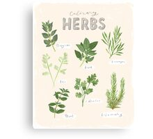 Culinary Herbs Canvas Print
