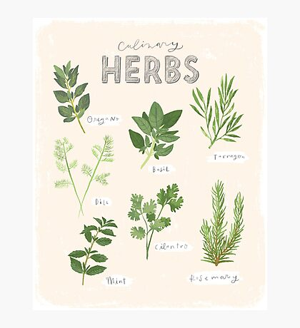Culinary Herbs Photographic Print