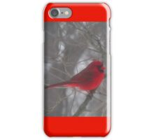 Cardinal Calm in Chaotic Conditions iPhone Case/Skin