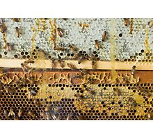 Closeup Bee Farm Photographic Print