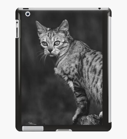 """Chat - Cat """" Peluche """" 05 (c)(h) ) by Olao-Olavia / Okaio Créations 300mm f.2.8 canon eos 5 1989 iPad Case/Skin"""