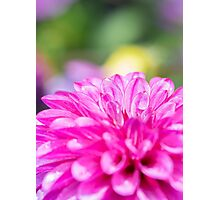 Dahlia Flower Colourful Macro Photographic Print