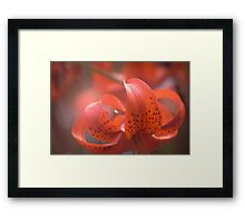 Summer Flower Colours Framed Print