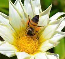 Bee by TheaShutterbug