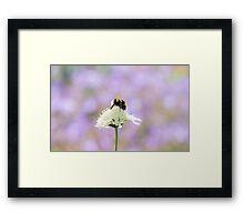 Lone Bumblebee on Flower Framed Print