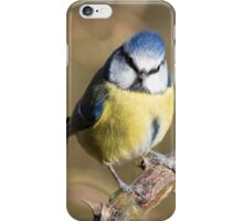 Blue Tit on Branch iPhone Case/Skin