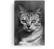 """Chat - Cat """" Peluche """" 04 (c)(h) ) by Olao-Olavia / Okaio Créations 300mm f.2.8 canon eos 5 1989    Canvas Print"""