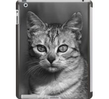 "Chat - Cat "" Peluche "" 04 (c)(h) ) by Olao-Olavia / Okaio Créations 300mm f.2.8 canon eos 5 1989    iPad Case/Skin"