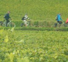 Cycling through Burgundy Sticker