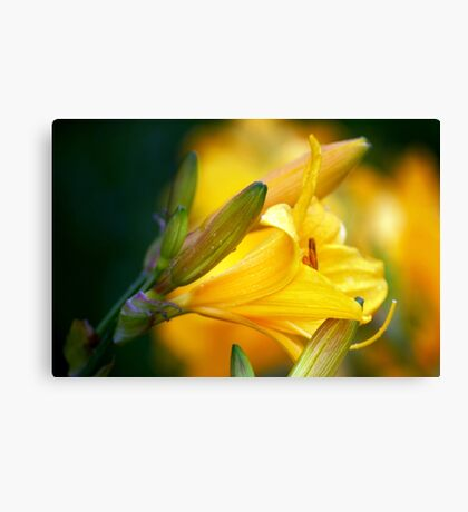 Lillies in the Evening Sun Canvas Print