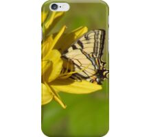 Lily Lover - Butterfly on Daylily iPhone Case/Skin