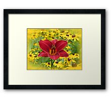 Scarlet Gold - Daylily with Rudbeckia Framed Print