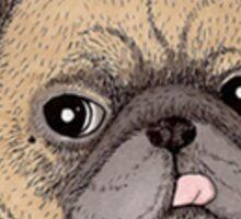 Vintage Pug Sticker